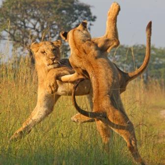 Ngorongoro + Serengeti+ Lake Manyara 5 NIGHT / 6 DAYS
