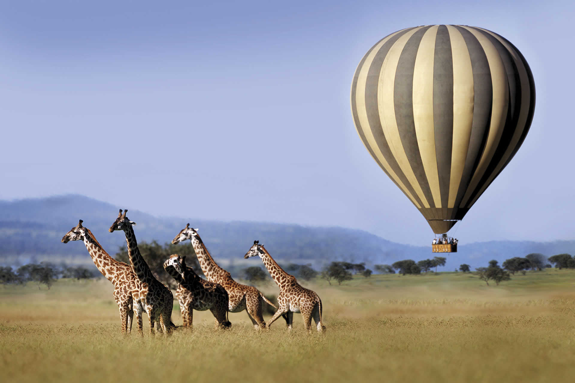5 Days Tanzania Mid Range Lodges&Tented Camp Safaris.