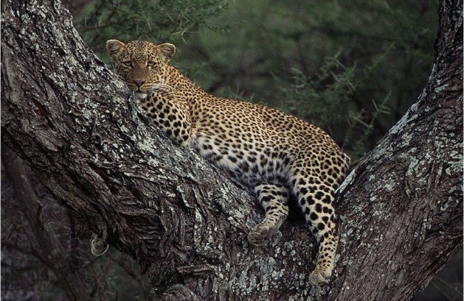 Serengeti + Tarangire + Ngorongoro 5 NIGHT / 6 DAYS
