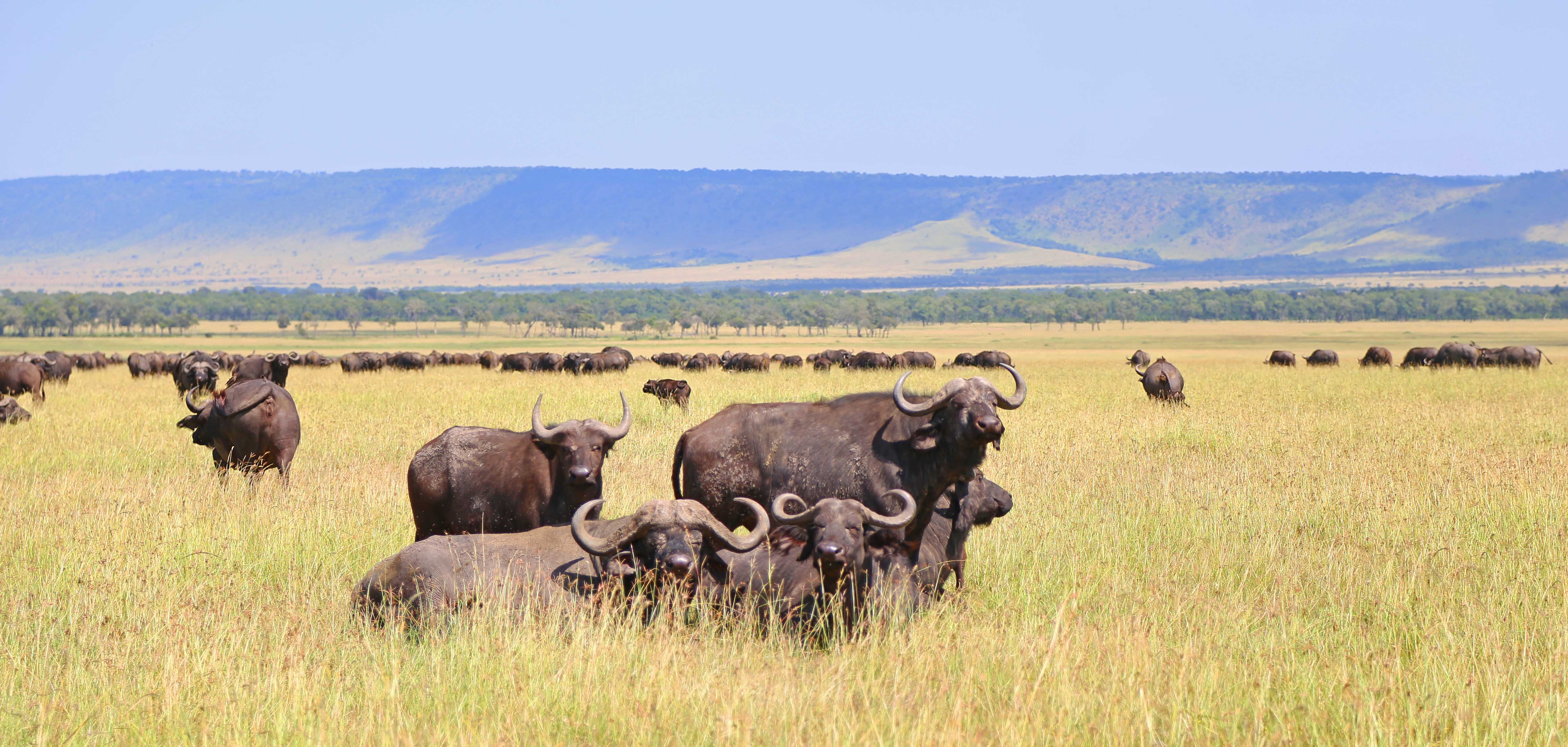 2 Day Tanzania Safari- Tarangire + Ngorongoro Crater