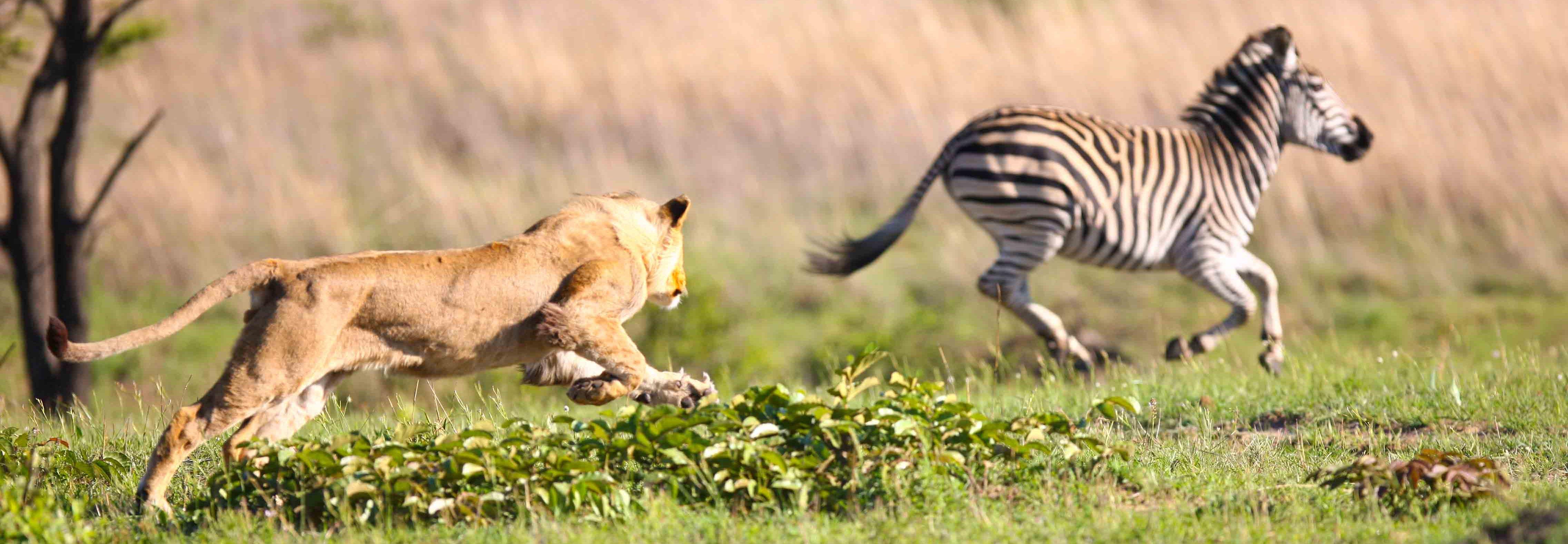 3 Day Tanzania Safari- Tarangire + Lake Manyara + Ngorongoro Crater
