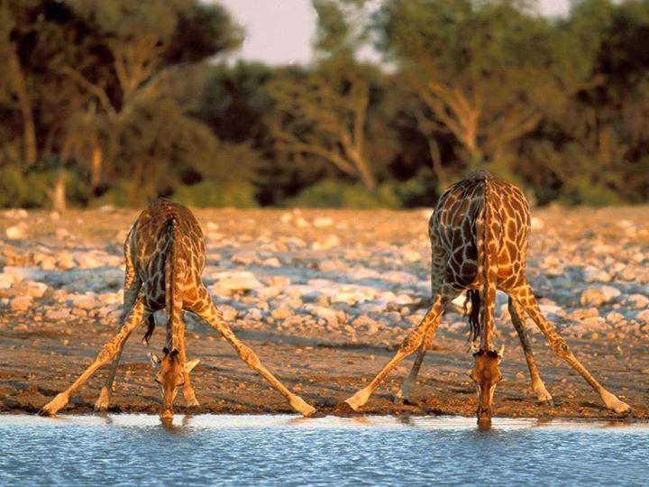 6 Day Tanzania Mid Range Lodges&Tented Camp Safaris