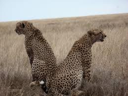 2 Days Tanzania Luxury Safaris