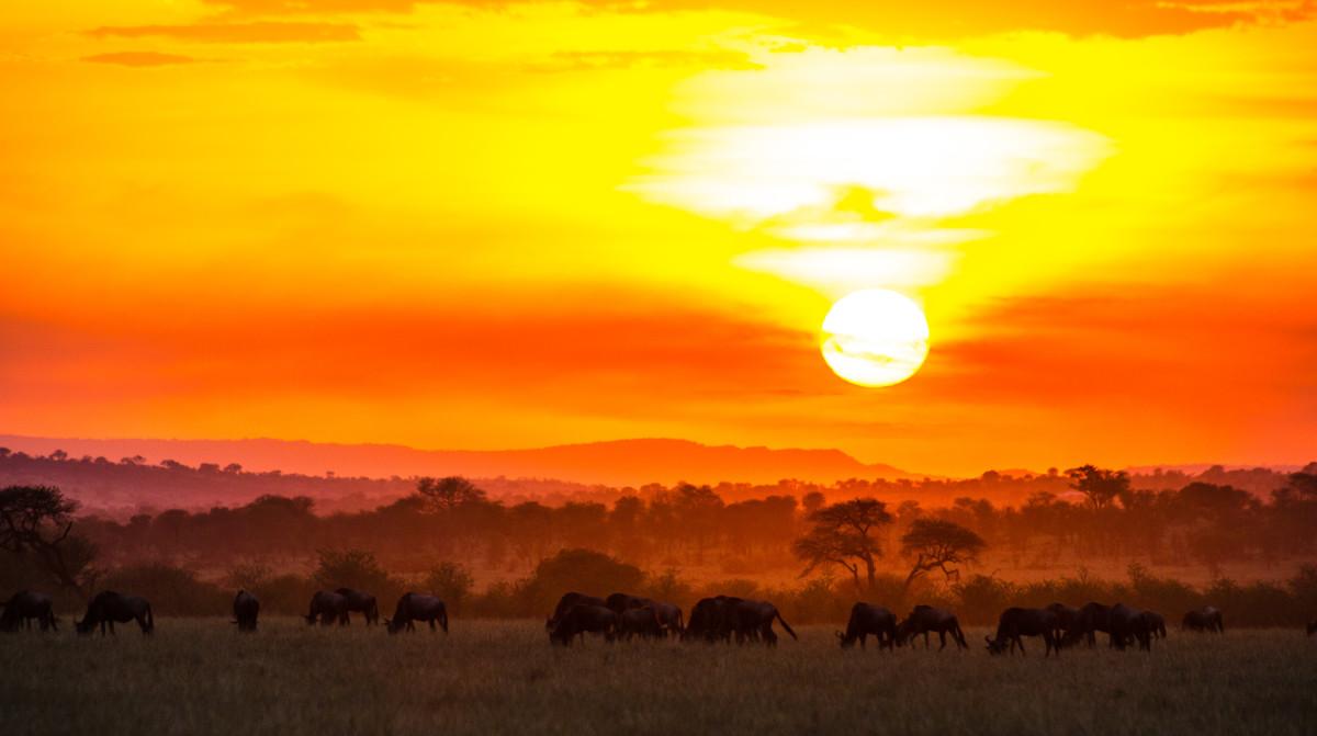 5 Days Tanzania Lodging Safari.