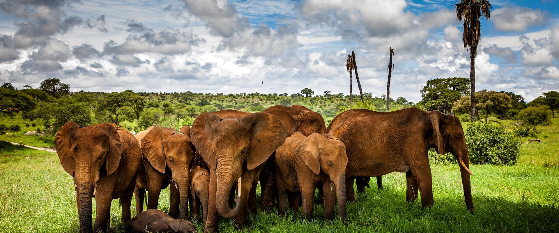 7 Days Tanzania Lodging Safari.