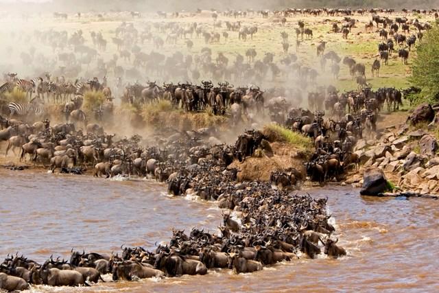 5 Days Serengeti Wildebeest Migration